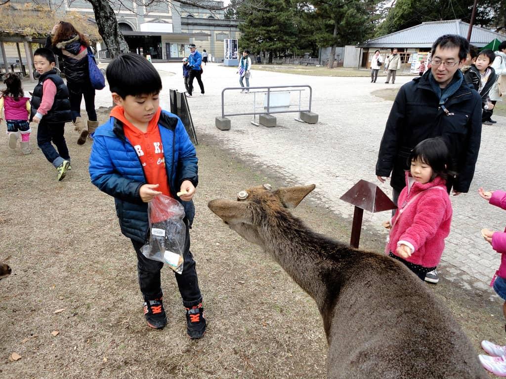 Nara - 2011
