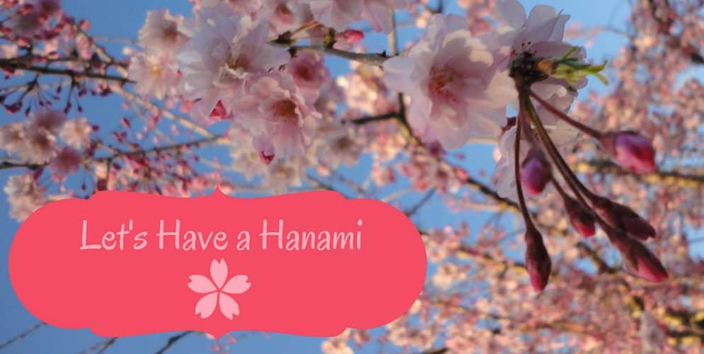 Let's Have a Hanami!