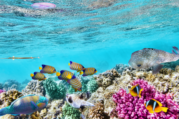 4 Things to Do at The Great Barrier Reef in Queensland, Australia